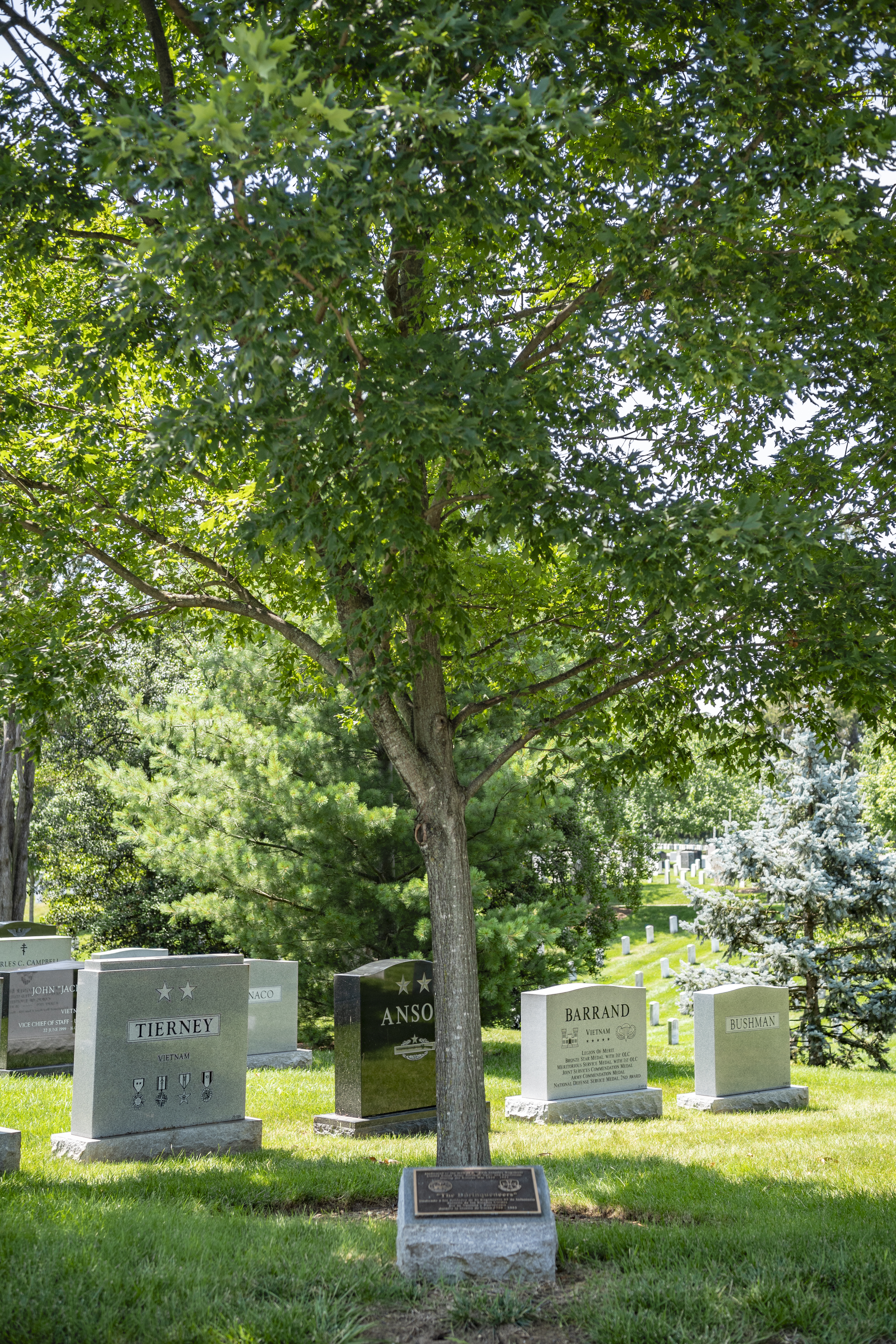 memorial tree dedicated to the Puerto Rican soldiers of the 65th Infantry