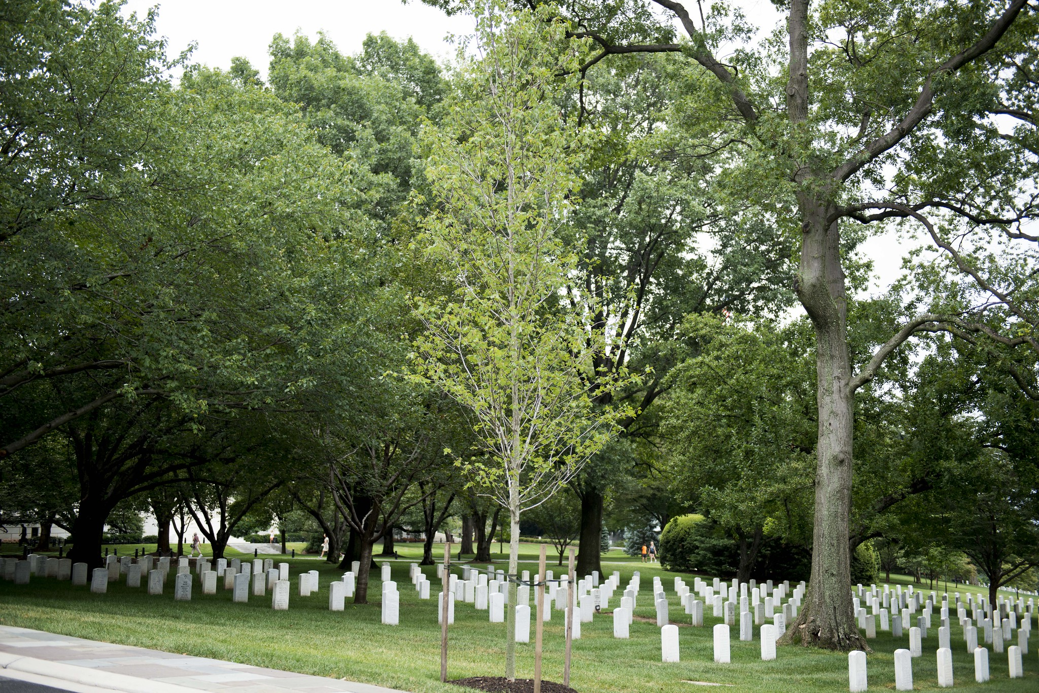 The Vietnam Helicopter Pilots Memorial Tree at Arlington National Cemetery